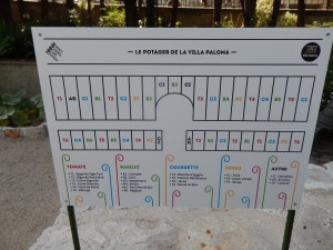 растения в саду виллы Палома в Национальном Музее Монако