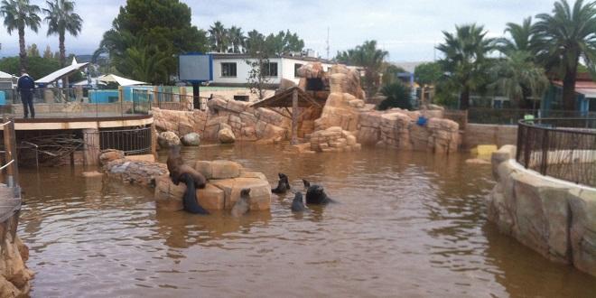 Потоп в дельфинарии
