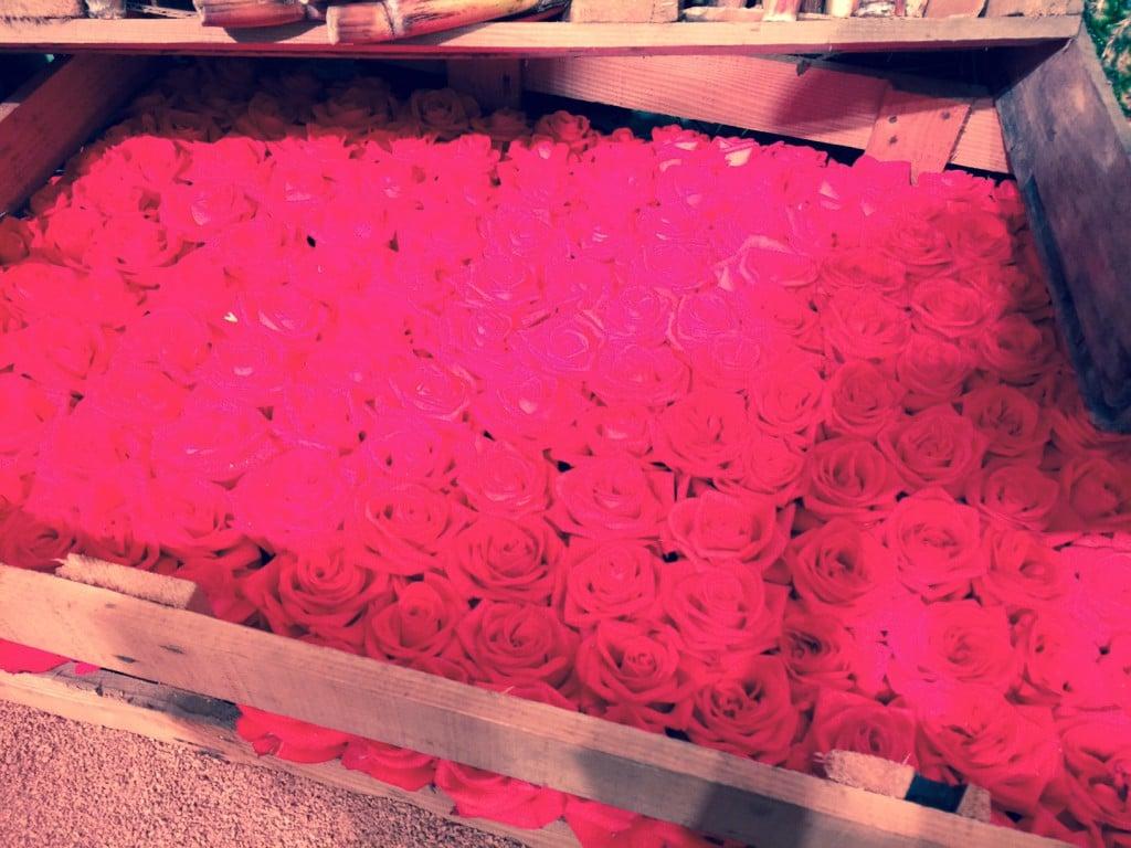 Розы на Балу Роз