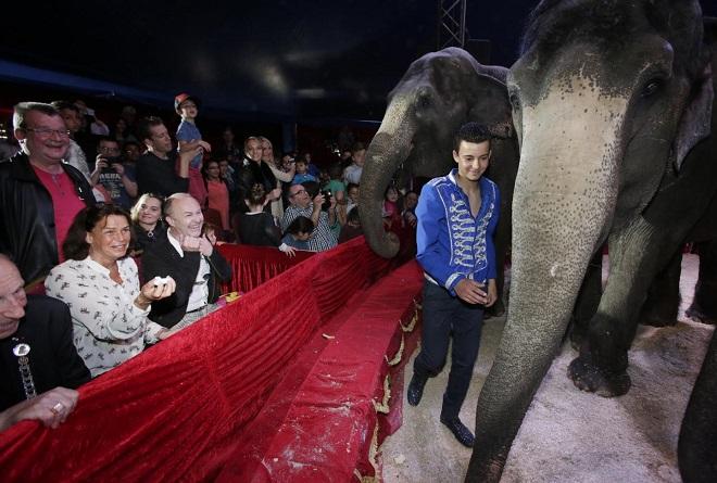 Слоны в цирке Медрано
