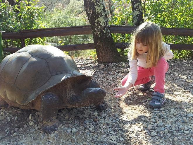 Черепахи в зверинце Монако