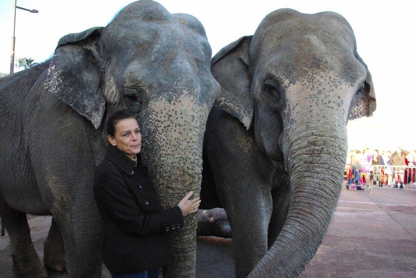 Принцесса Стефания со слоном