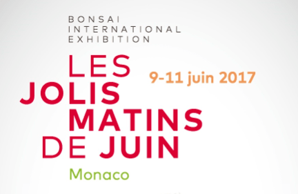 Международная выставка бонсай