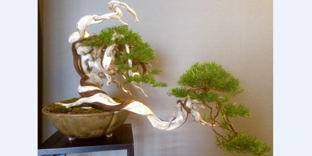 В Монако состоялась выставка миниатюрных деревьев