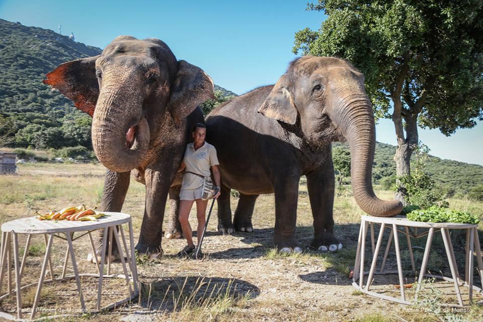 Дела княжеские: стрит-арт и спасение слонов