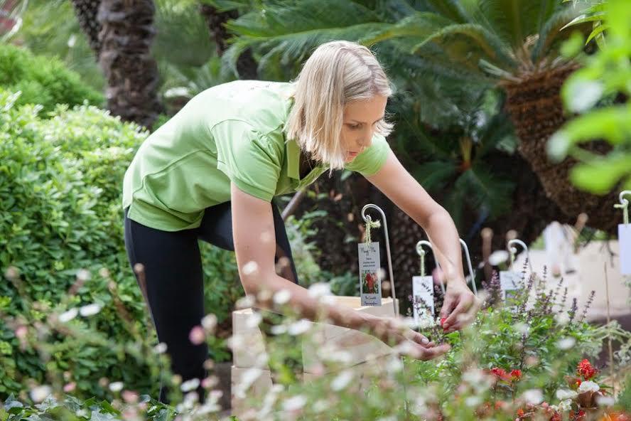 Terre de Monaco: огород в городе