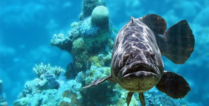 В Монако провели перепись морских обитателей