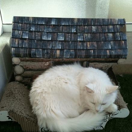 В Босолей открыли приют для кошек