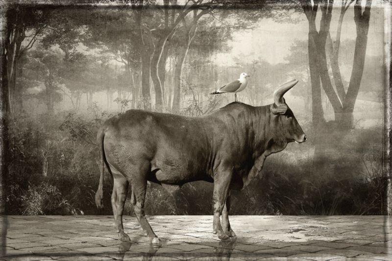 Выставка недели: животный мир Яна Гульфосса