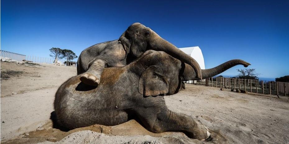 Очаровательные слоны принцессы Стефании в Монако
