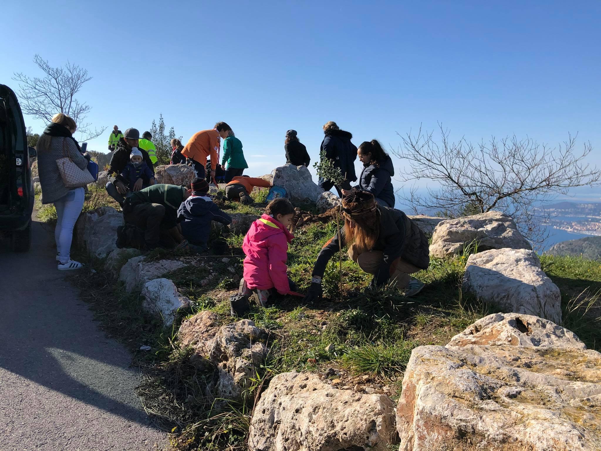 Новый проект Монако по посадке деревьев в Ля Тюрби