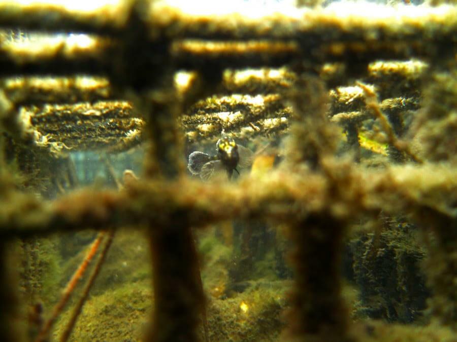 """Установка искусственных """"убежищ"""" для морских видов в портах Фонвьей и Эркюль"""