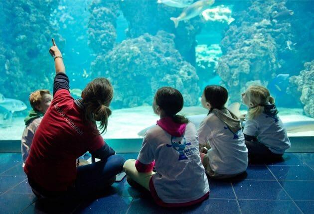 Океанографический музей организовал морскую экскурсию для школьников