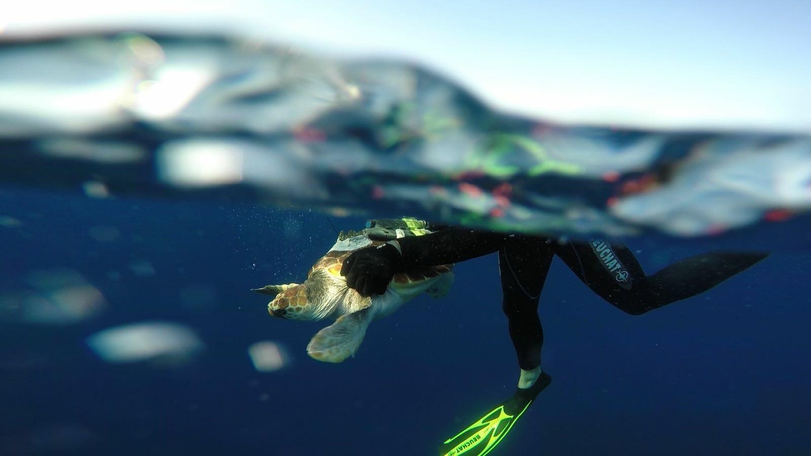 История черепахи Раны в Монако