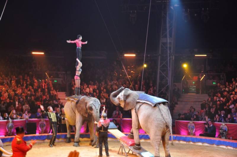 43-й Международный цирковой фестиваль: День открытых дверей