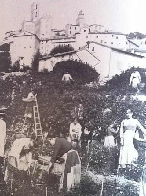 Сбор цветов в Грассе