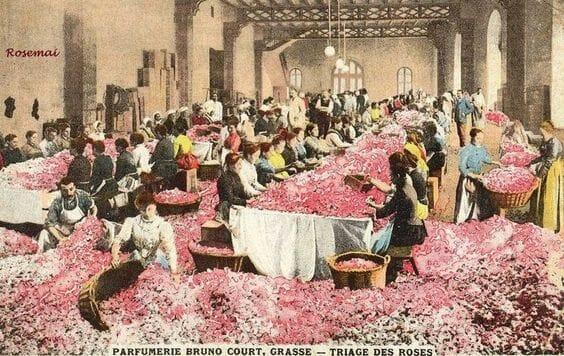Сортировка лепестков роз