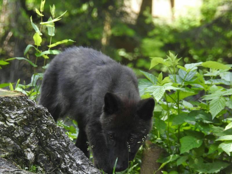 Парк Альфа в Сен-Мартен-Везюби: до дикой природы – рукой подать