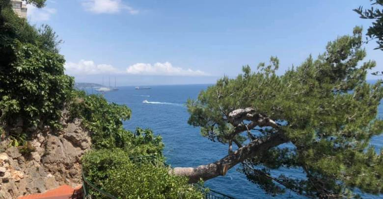 Съемки ремейка фильма Хичкока в Экзотическом саду Монако