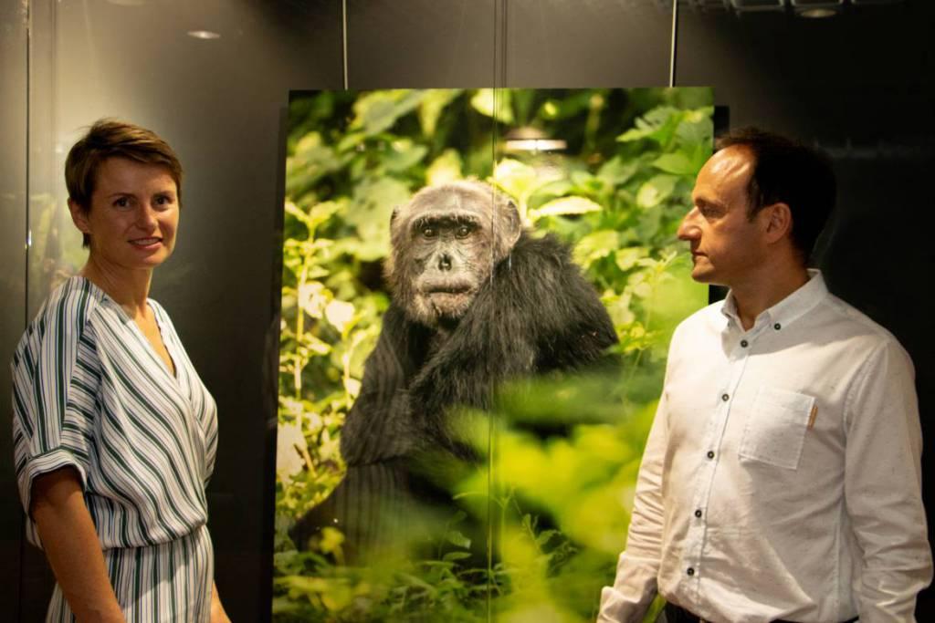 Выставка «Шимпанзе: повелители джунглей»