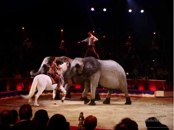 44-й Международный цирковой фестиваль: шоу победителей