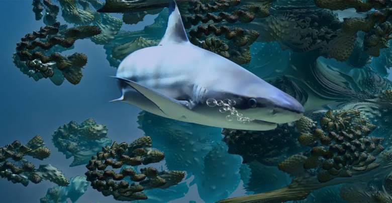 Акула замечена вблизи пляжа в Ментоне