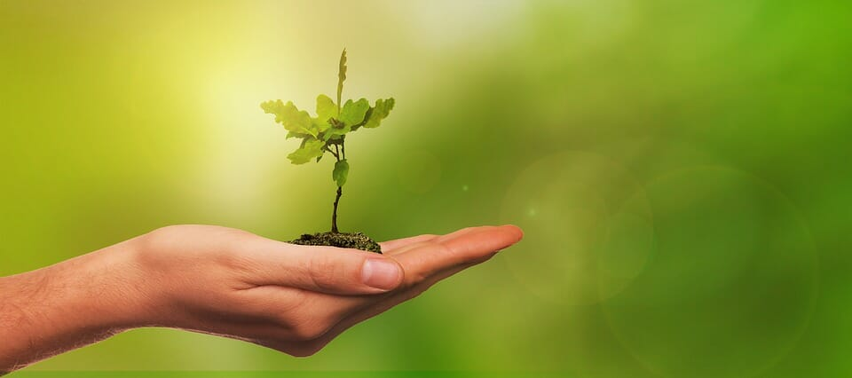 «1 новорождённый = 1 посаженное дерево»: covid-19 помешал традиционной высадке деревьевм