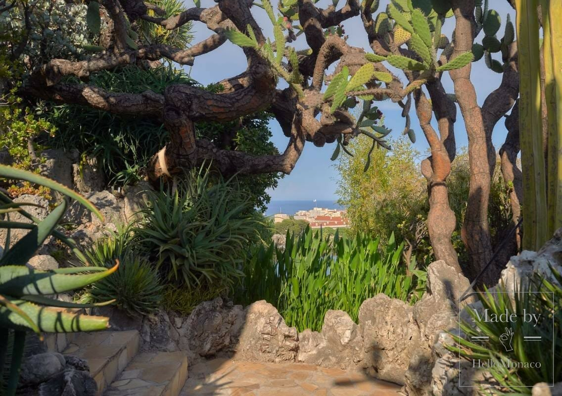 Ботанический центр Монако охраняет редкие и экзотические растения