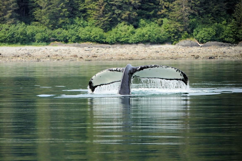 Миссия по защите китообразных огласила первые результаты