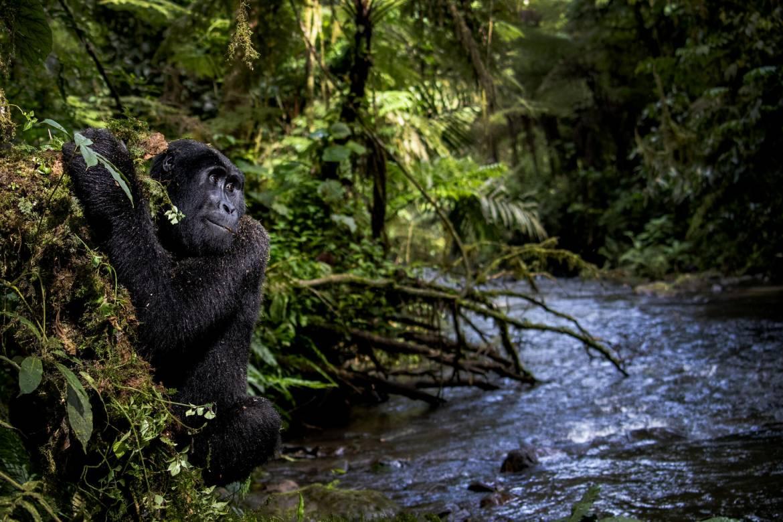 Конкурс Фонда князя Монако привлекает внимание к дикой природе