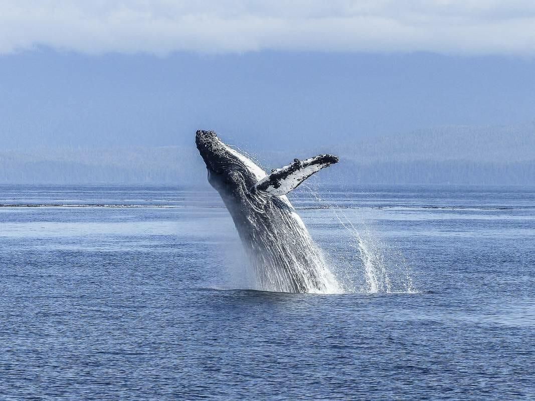 Монако за сохранение китообразных в Южном Средиземноморье
