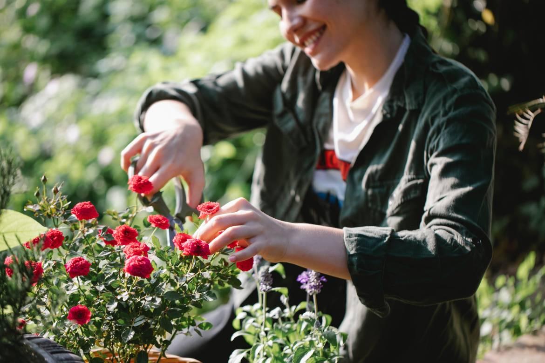 Международный конкурс роз вернулся на Лазурное побережье