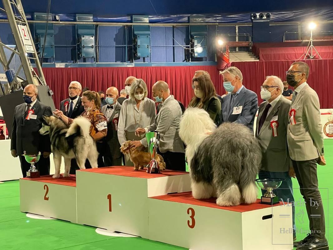 Редкие и экзотические породы на Выставке собак в Монаком