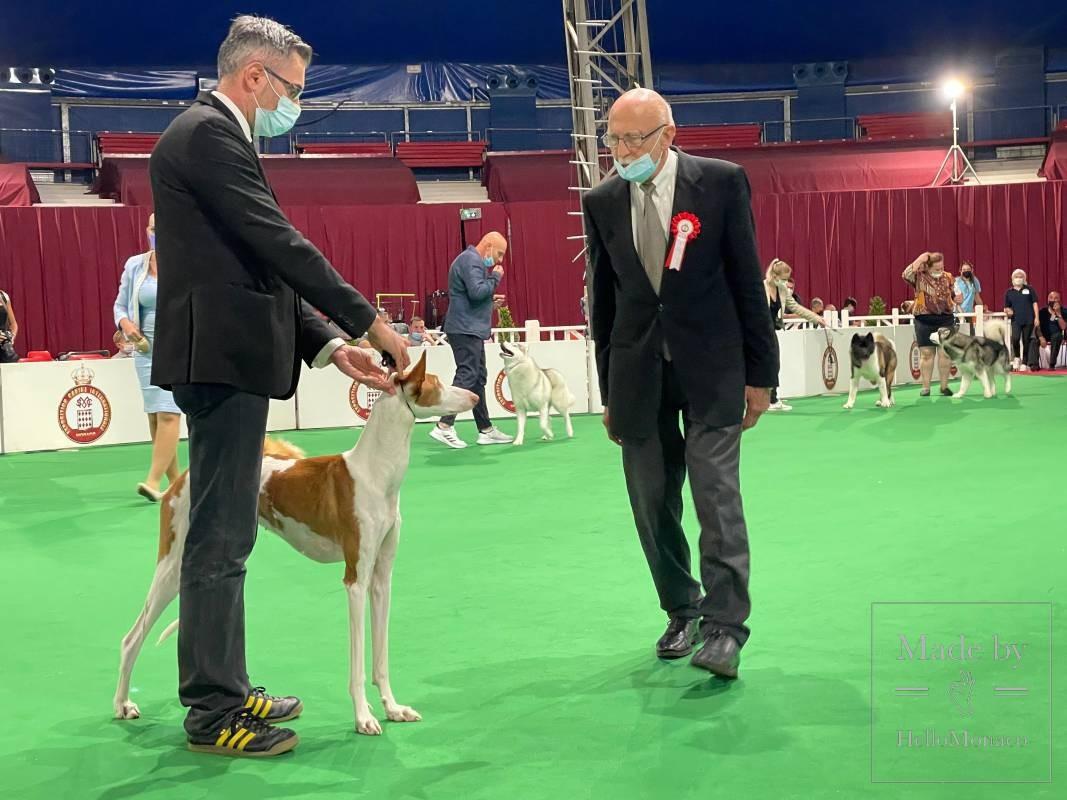 Редкие и экзотические породы на Выставке собак в Монако